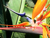 Fri 06-09-01 Bird of Paradise