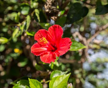 Maui (15 of 135)