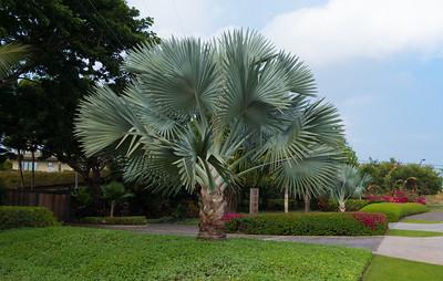 Maui (11 of 135)