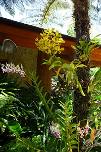 Lots of beautiful orchids growing on the trees
