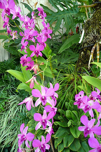More beautiful orchids on the trees