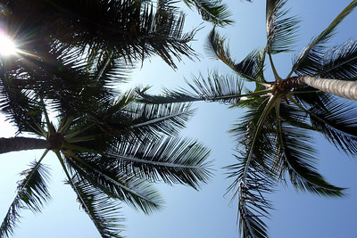 View of the palm trees from the hammock