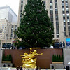 Xmas Tree in Rockafeller Center