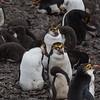 NZ Sub-Antarctic Islands306