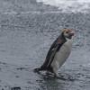 NZ Sub-Antarctic Islands307