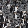 NZ Sub-Antarctic Islands305
