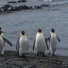 NZ Sub-Antarctic Islands300