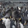NZ Sub-Antarctic Islands297