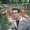 Adastra Gardens Flamingos.