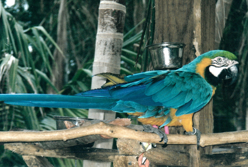 Adastra Gardens parrot.