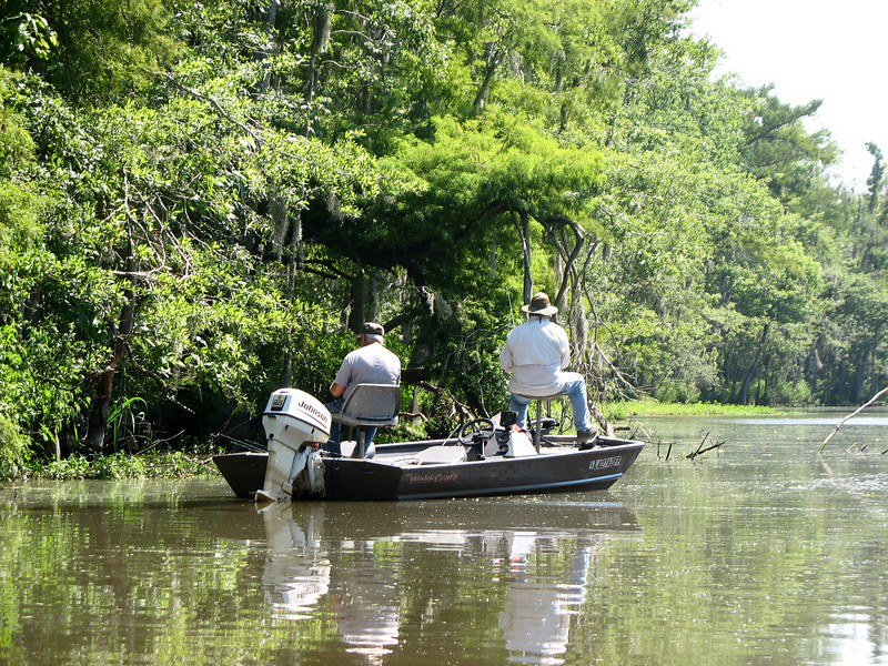 Swamp Fishing.