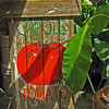 Creole tomatoes.