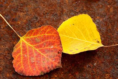 Pair of Leaves