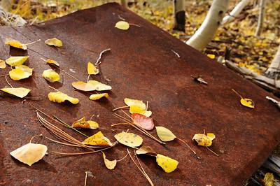 Rust & Leaves