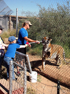 Feeding the Tiger