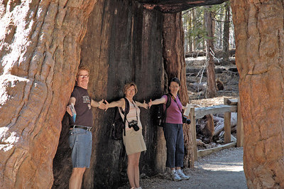 California Tunnel Tree in Mariposa Grove Yosemite National Park