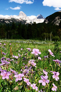 Wildflowers in the bottom of Teton Canyon
