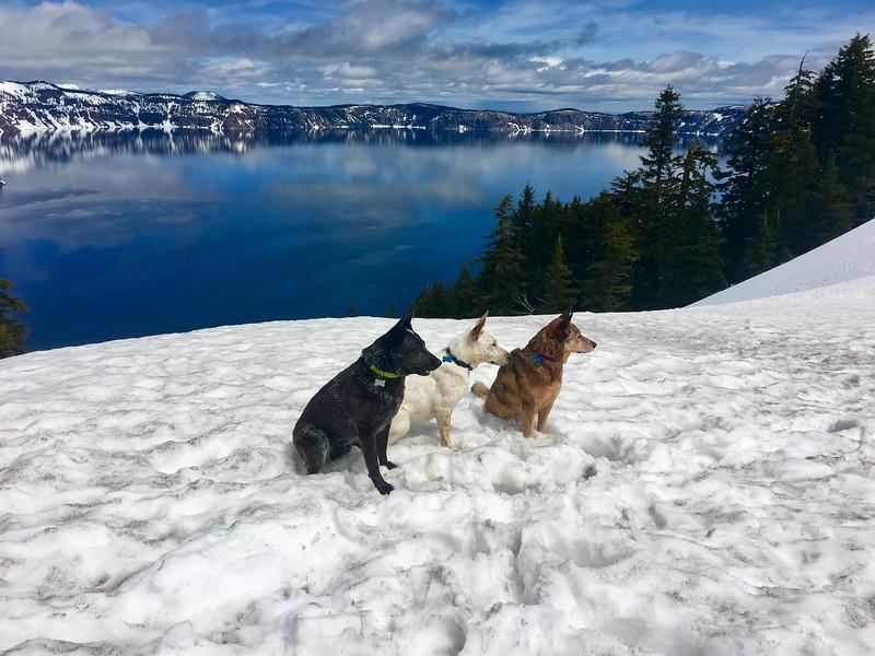 Kona, Loki & Walton at Crater Lake