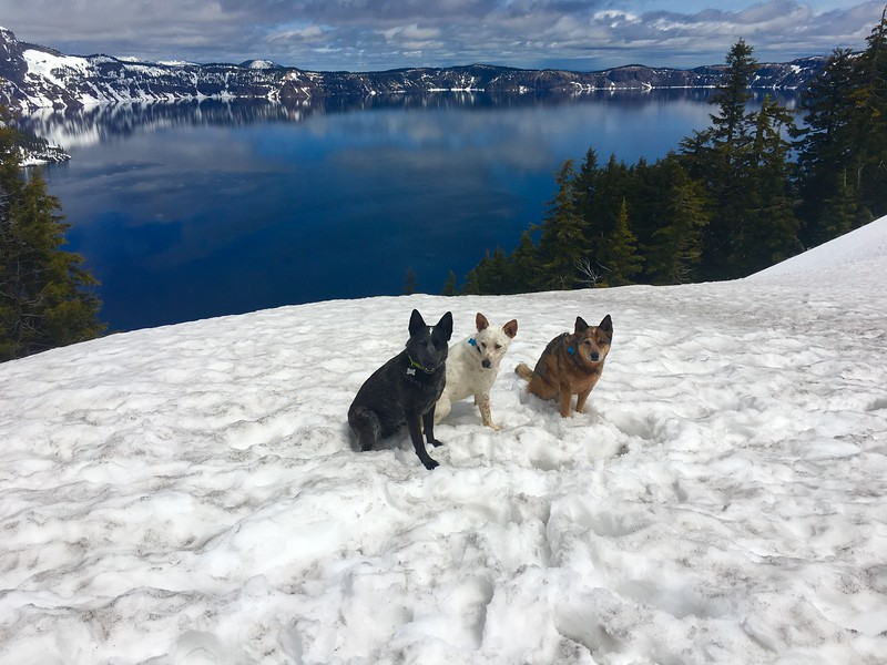Kona, Loki & Walton at Crater Lake