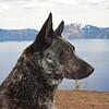 Loki at Crater Lake