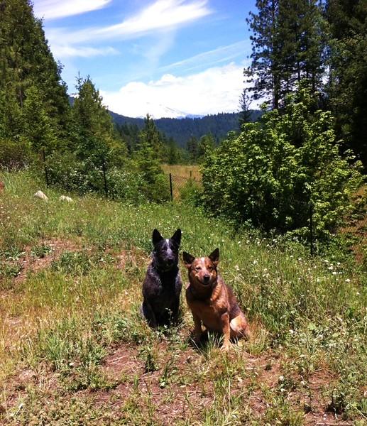 Kona & Loki with Mount Shasta in the background