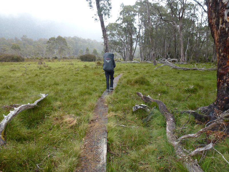 Day 7 (Overland Track)