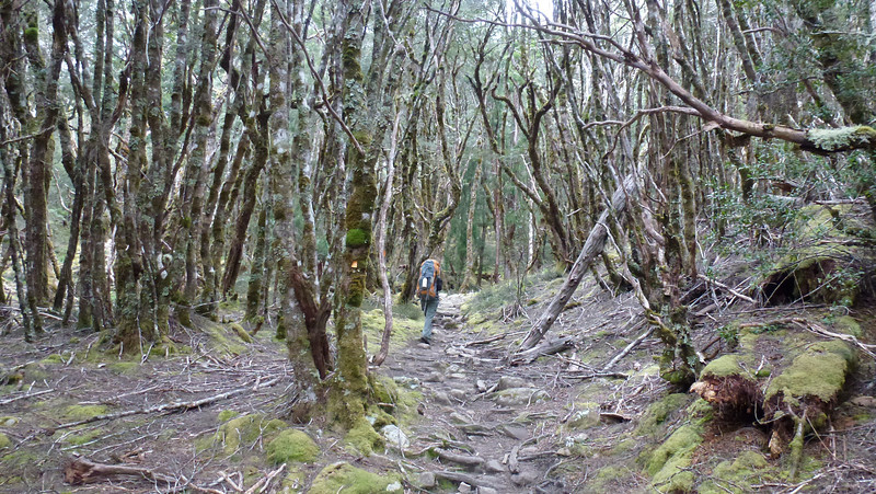 Day 4 (Overland Track)