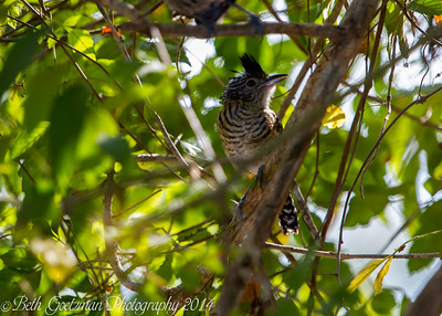 Images from folder Birds processed