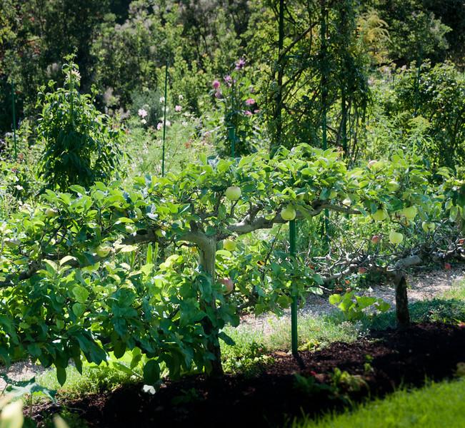 09-03-10 Giverny: Apple esplalier garden border