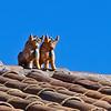 458 Bulls on Roof