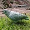 311 Parrot