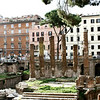 Temple remains in  Largo di Torre Argentina.