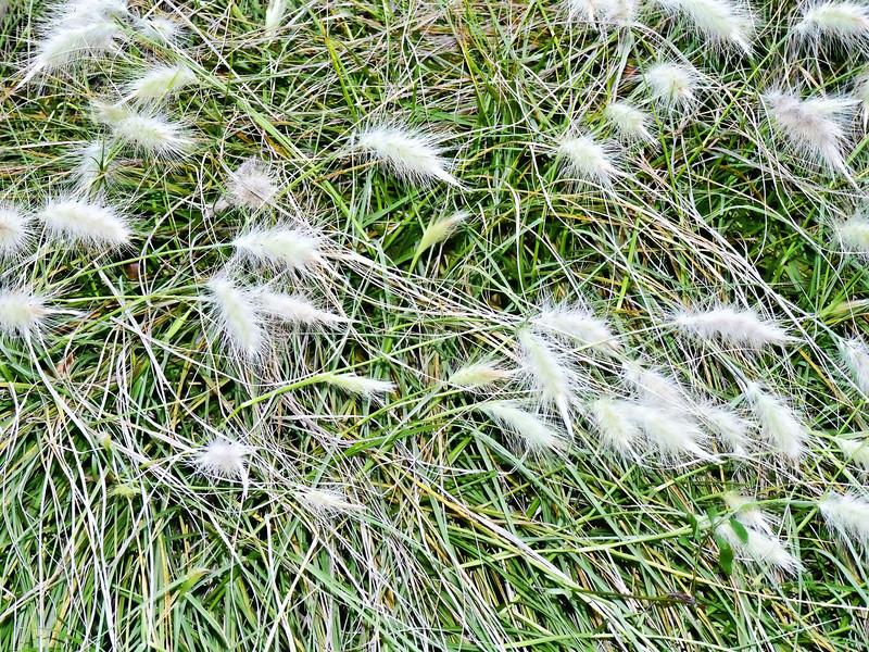 Still green grasses.