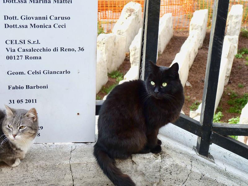 Largo di Torre Argentina has a no-kill cat sanctuary.