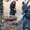 Roasting chestnuts in Piazza di Spagna.