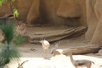 20170807-004 - San Diego Zoo
