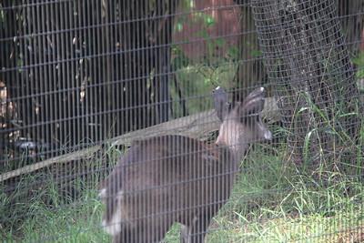 20170807-002 - San Diego Zoo
