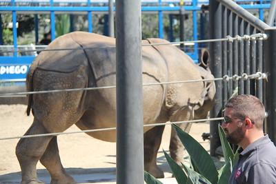 20170807-019 - San Diego Zoo - Rhinoceros