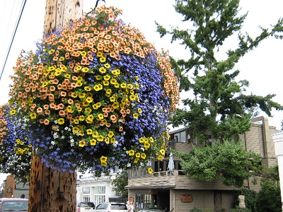 Day 4 La Conner WA These balls of flowers were everywhere in WA