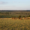 The rolling plains of the Serengeti are vast, and covered with wildebeest (an estimated 1.4 million of them, according to a bloke we had dinner with whose job it was to count them).