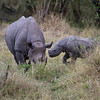 Rhino with baby!