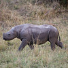 Baby rhino! This poor little guy doesn't have ears or a horn!