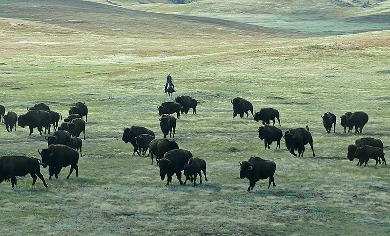 869 Bison