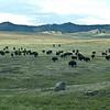 868 Bison Arirving