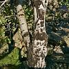 825 Tree Bark