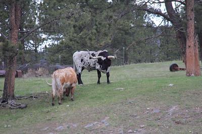 20140517-02-SouthDakota-Longhorns