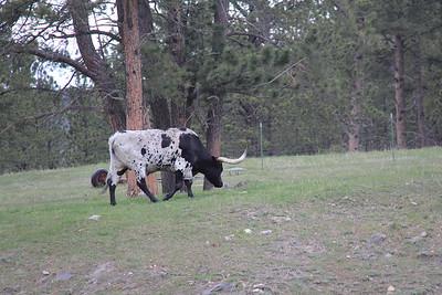 20140517-05-SouthDakota-Longhorns