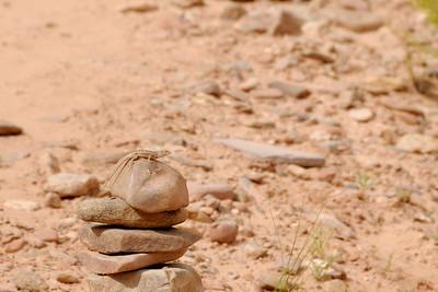 A lizard marking the trail