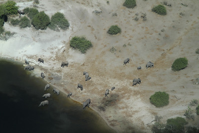 Elephants in Okavango Delta