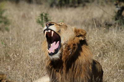 Nope, just yawns
